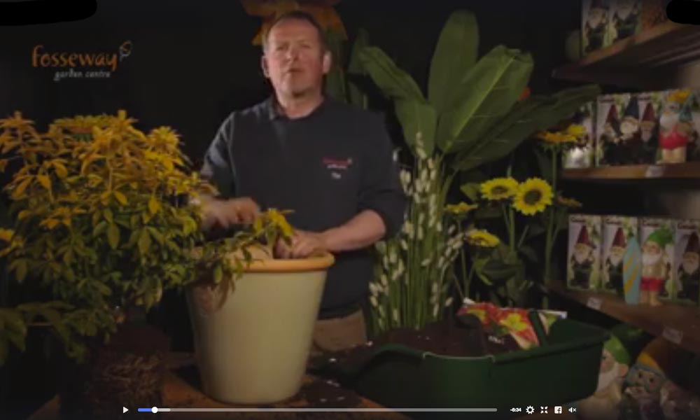How to pot the perfect shrub video still