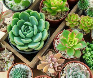 Succulent houseplants at Fosseway Garden Centre
