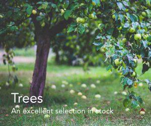 Trees at Fosseway Garden Centre