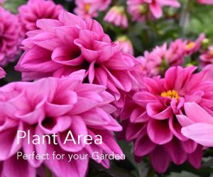 Plant Area at Fosseway Garden Centre
