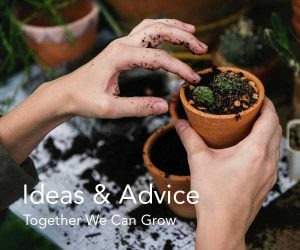 Ideas and Advice at Fosseway Garden Centre