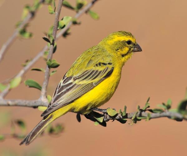 Song Birds at Fosseway Garden Centre